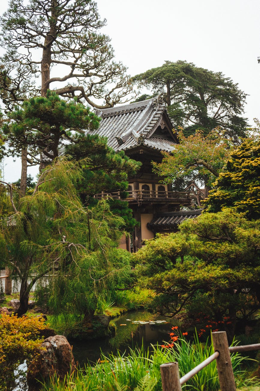 japanese house near pond in lush picturesque garden